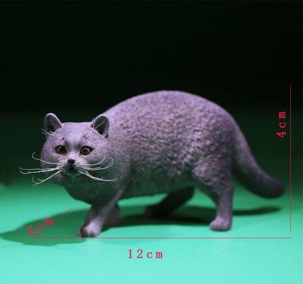 画像1: Mr.Z 1/6 ブリティッシュ ショートヘア 6種 カラー選べます 動物 置物 フィギュア (1)
